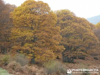 El Castañar de El Tiemblo, turismo activo madrid; sin guias senderismo